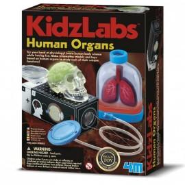 Human Organs - Órganos humanos, 4M
